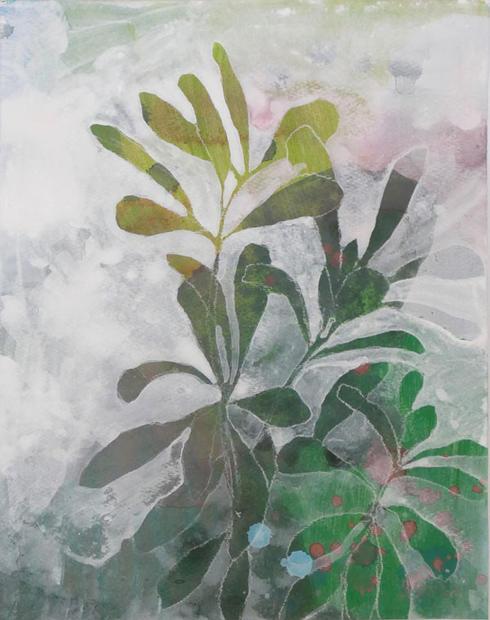 Banksia Integrifolia 3