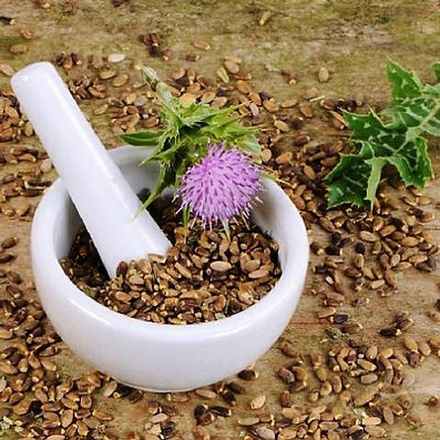 TN Scientific The Hangover Pill Research Article Milk Thistle in white mortar and pestle bowl on dirt being ground with a purple milk thistle flower next to it and seeds surrounding it
