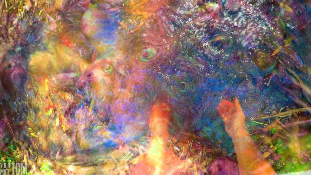 TN Scientific Test Narcotics shrooms psilocybin psilocin magic mushrooms edible psychedelic trippy effect pov point of view acid trip lsd
