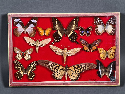 antiker Schmetterlingskasten