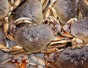 Public Input Wanted On Dungeness Crab Fishery