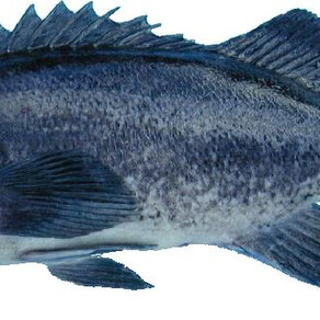 Meeting To Discuss Commercial Nearshore Fishery
