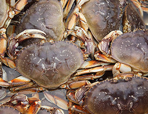 Comments Sought On Dungeness Crab Season