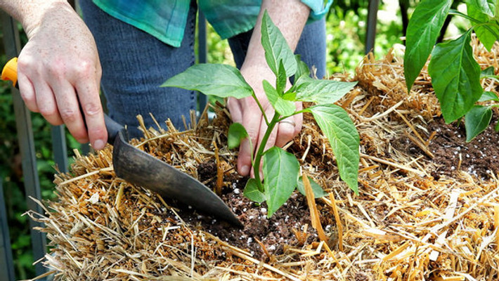 Master Gardener Straw Bale Gardening