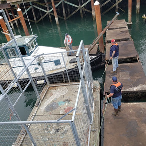 Port Assists With Sealion Isolation Cage