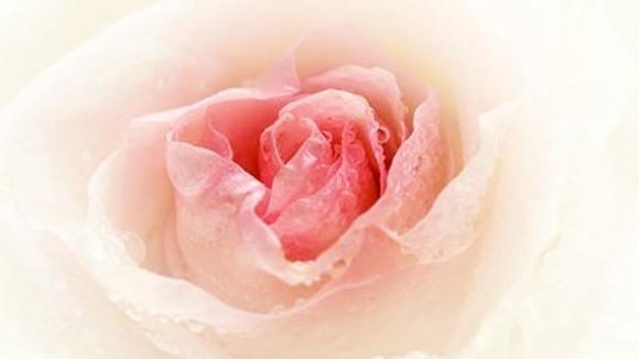 Master Gardener Rose Pruning Event