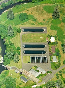 No Fish Loss At Salmon River Fish Hatchery