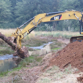 Yaquina Estuary Restoration Project