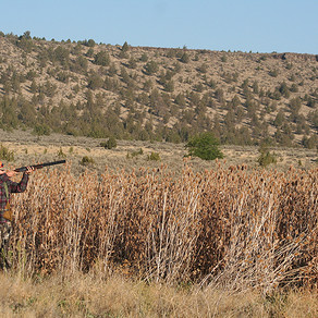 Free Pheasant Hunt For Youth