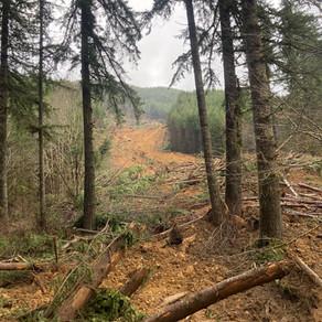 Fall Creek Landslide