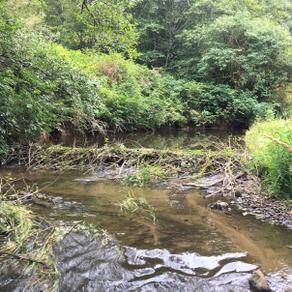 Mid Coast Watershed Restoration Work
