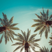 California-Palm-Trees-Blue.png