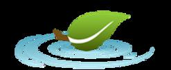 YTM Leaf Logo