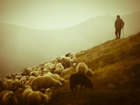 Shepherd Your Flock
