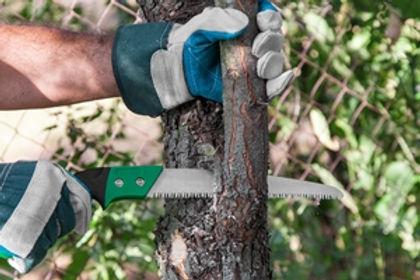 tree-cutting-new-jersey.jpg