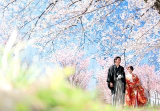 赤城南面千本桜 ロケーションフォト