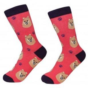 Sock Daddy Pomeranian