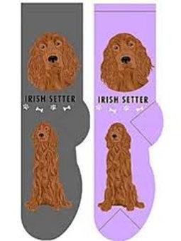 Foozys Irish Setter