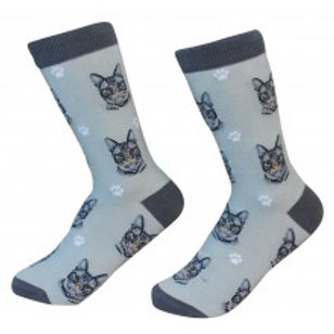 Sock Daddy Silver Tabby Cat