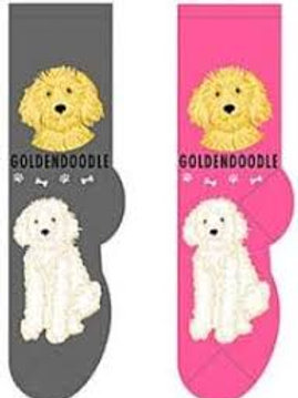 Foozys Goldendoodle
