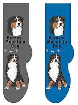 Foozys Bernese Mountain Dog