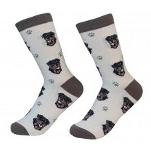 Sock Daddy Rottweiler
