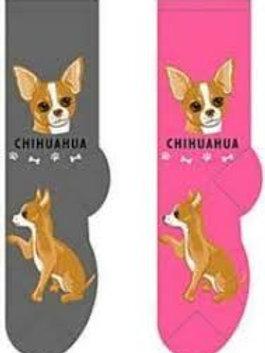 Foozys Chihuahua