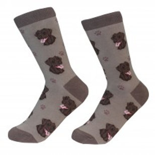 Sock Daddy Chocolate Lab Labrador Retriever