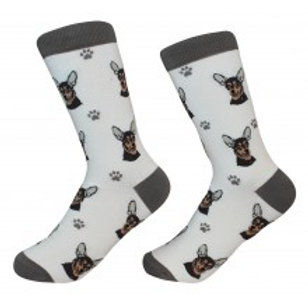 Sock Daddy Black and Tan Chihuahua