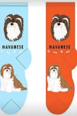 Foozys Havanese