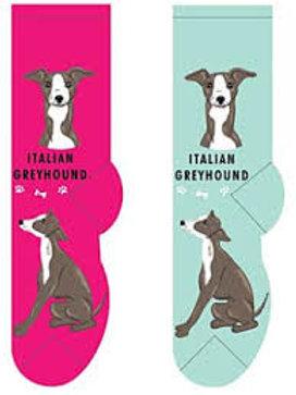 Foozys Italian Greyhound