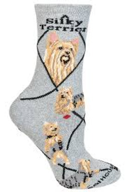 Wheelhouse Silky Terrier