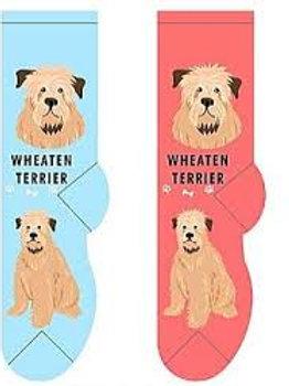 Foozys Wheaten Terrier