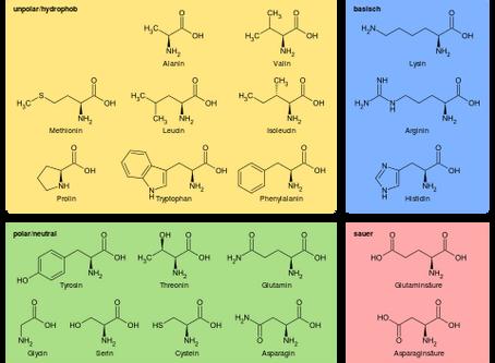 Aminosäuren - was, warum, wozu?