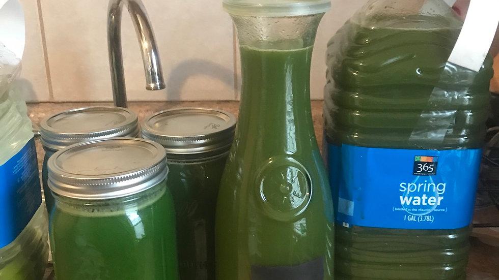 """HULK Smash """"Green Juice"""""""