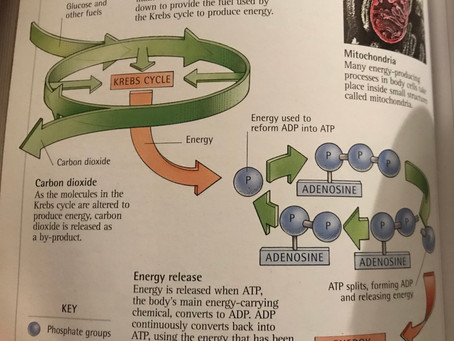 How Food Provides Energy