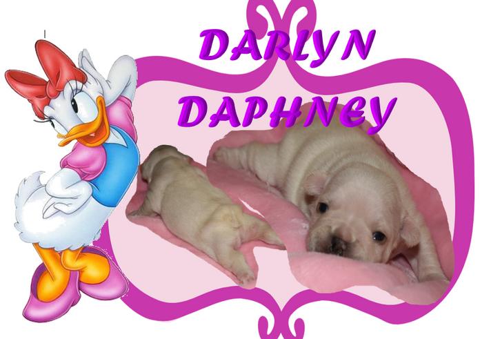 DARLYN DAPHNEY.PNG