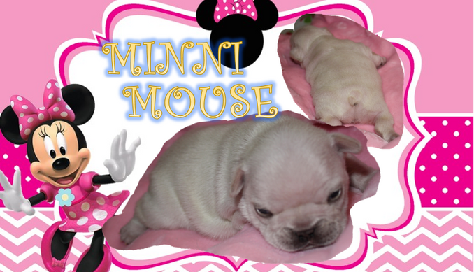 MINNI MOUSE.PNG