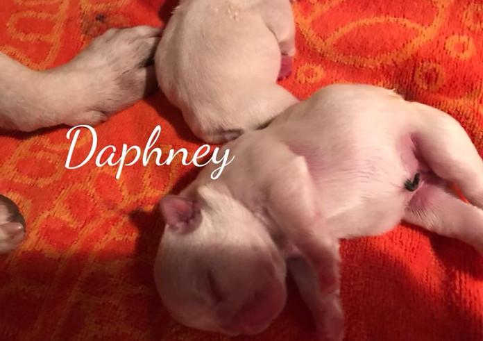 Daphney.jpg