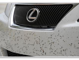 It's Love-Bug Season!!!