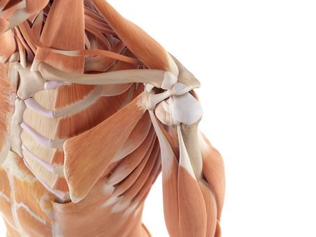 La pathologie de l'épaule