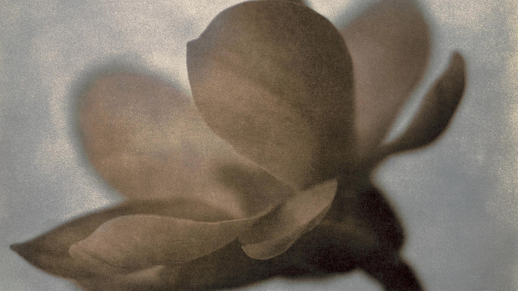 Thomas Brummett - Magnolia