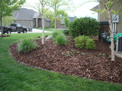 An established mulch planting bed with trees and shrubs.