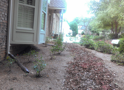 Shredded pine bark mulch works as a pathway leading fom the front to the back of this residence.