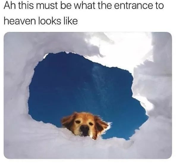 Golden retriever looking down from heaven