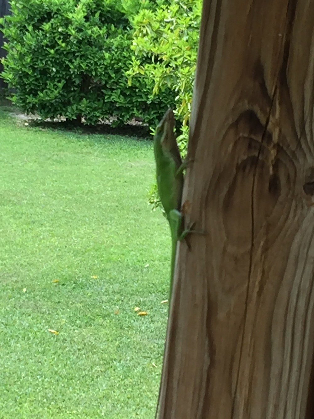 green llizard on a pole Tallahassee bed and breakfast