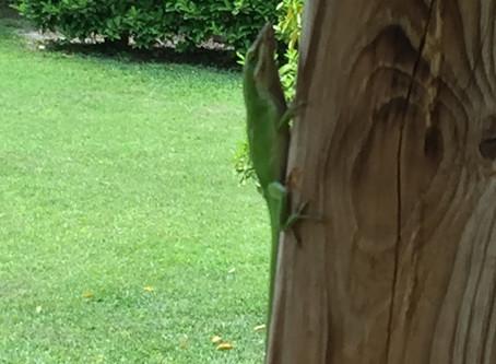 A true social chameleon