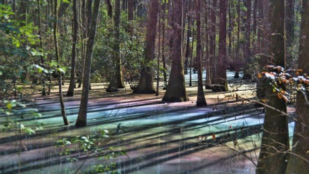 Rainbow swamp in Tallahassee, Florida