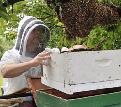 Steve Finke - Beekeeper