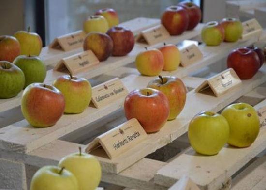 תפוחי עץ בואל די נון